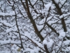 sne med +2/3 eksponeringskompensation
